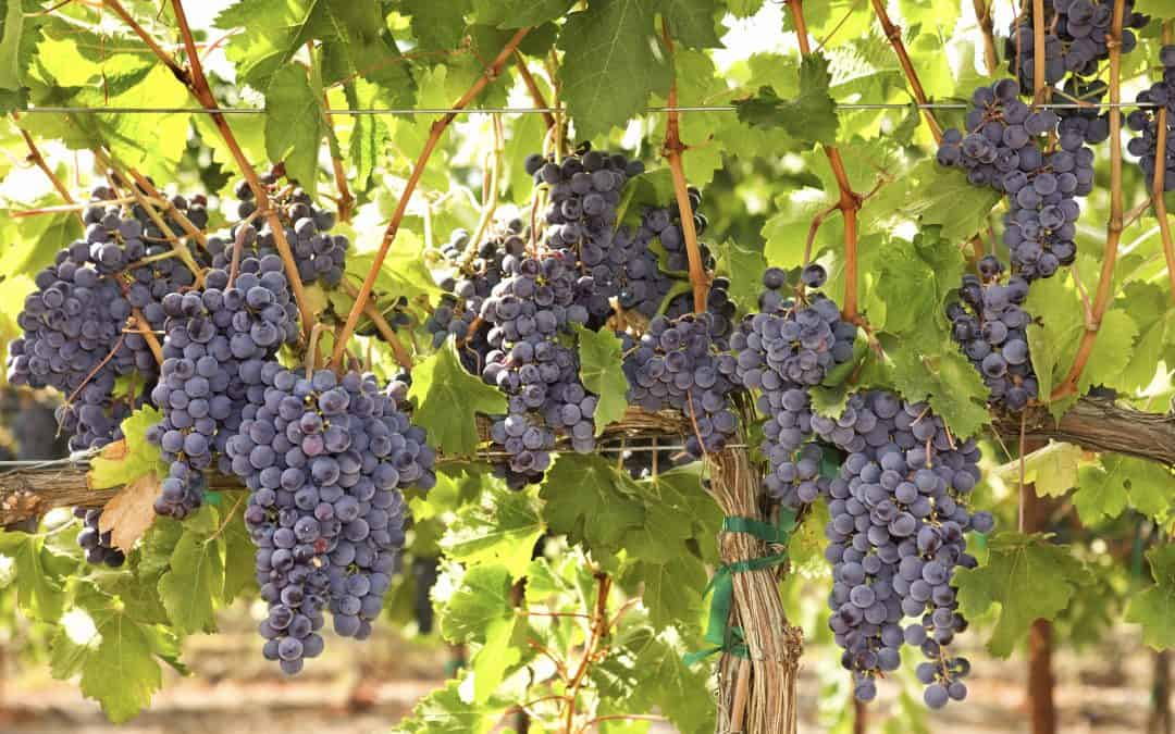 Fruit-Bearing Discipleship (June 13)