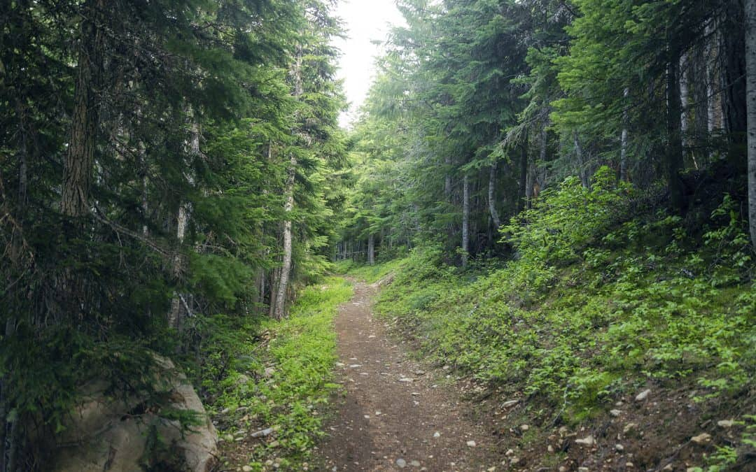Pathways (October 3)