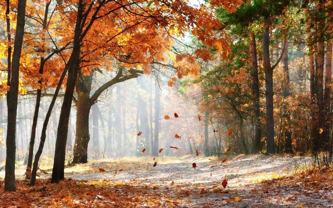 Poetry (October 17)